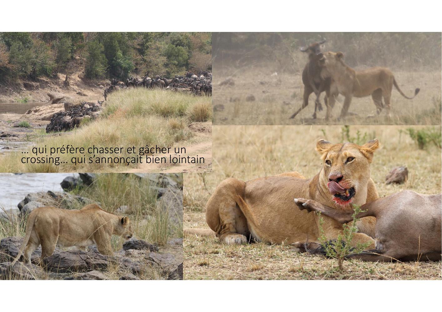 2017-safari_kenya-01