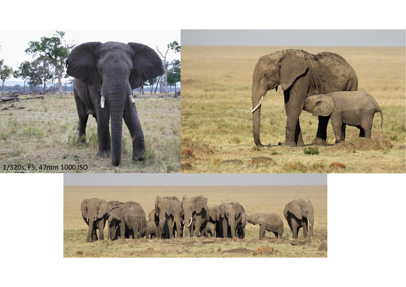 2017-safari_kenya-80