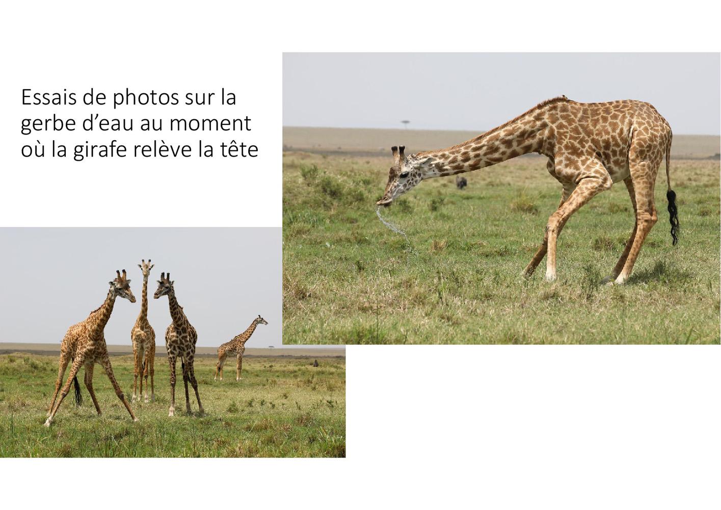 2017-safari_kenya-82