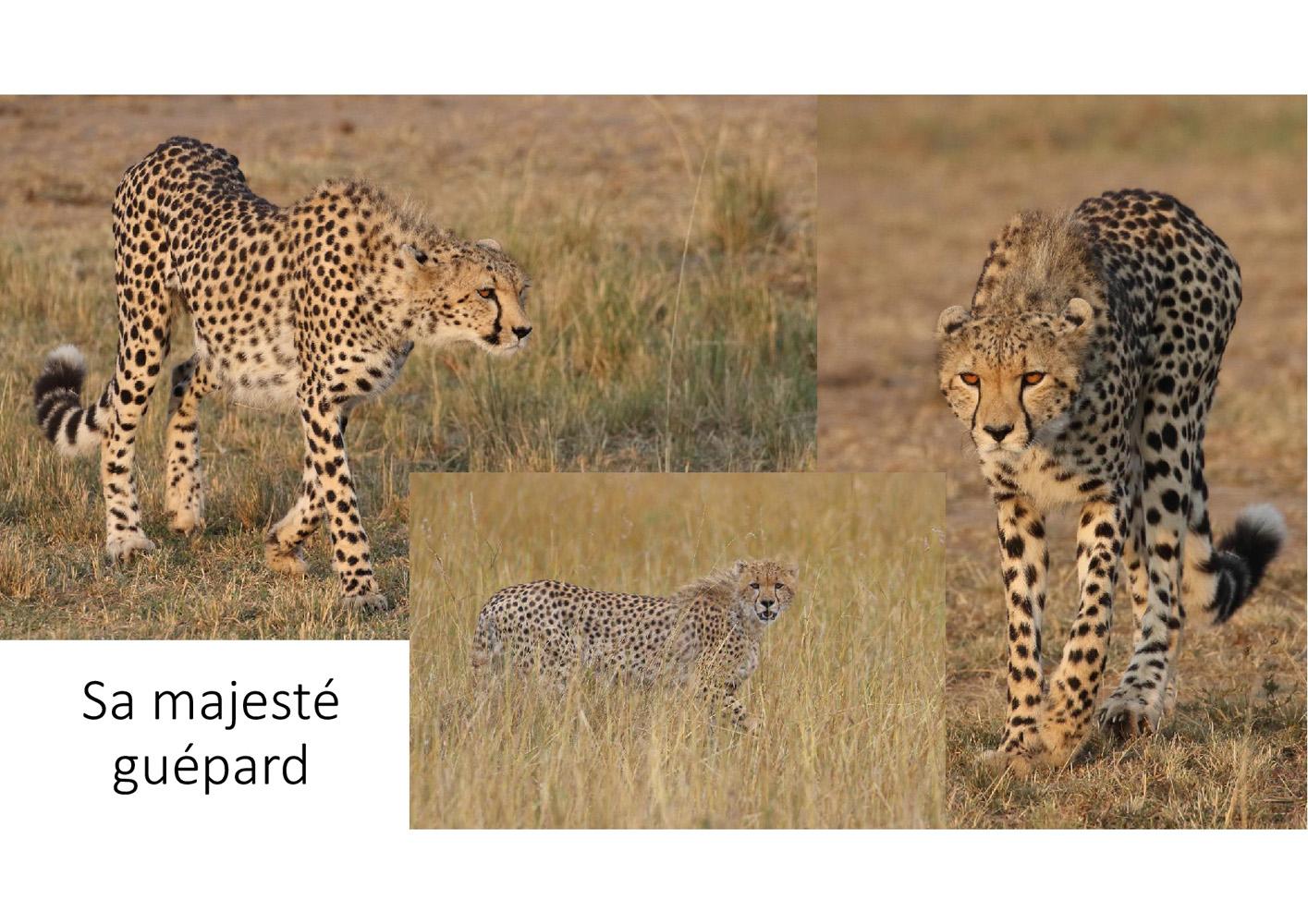 2017-safari_kenya-83