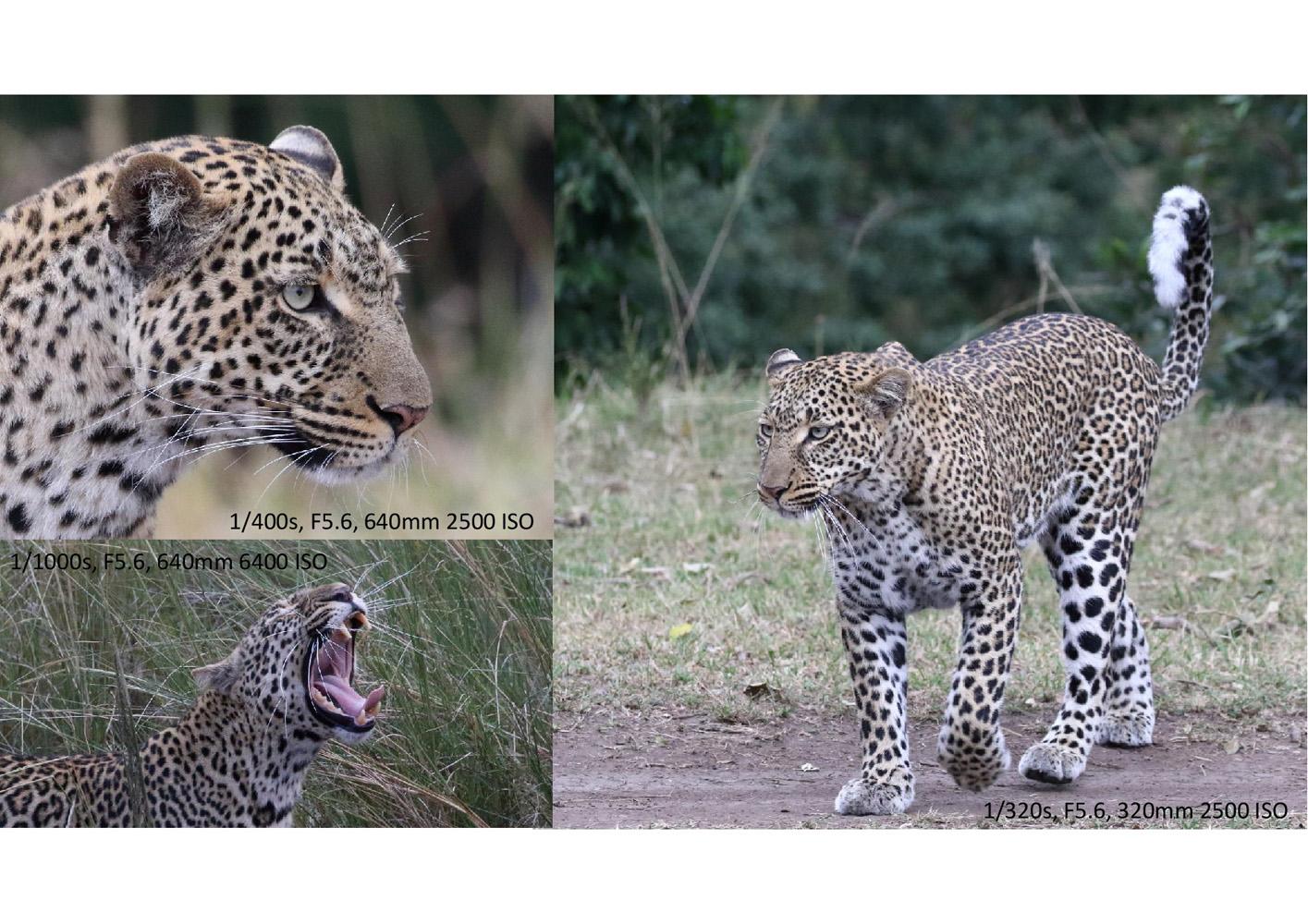 2017-safari_kenya-85