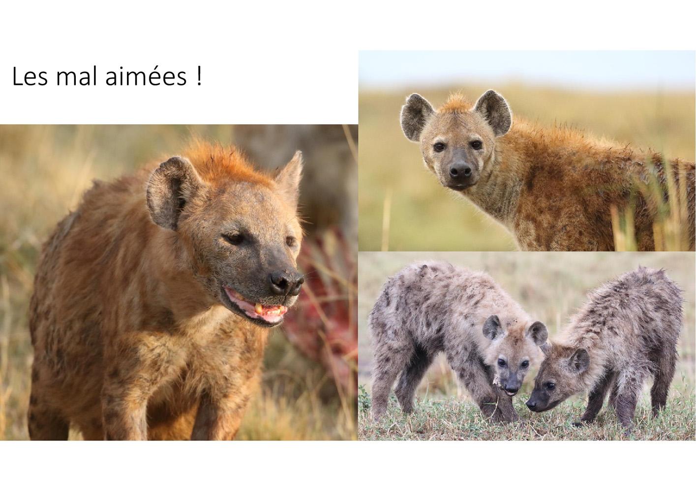 2017-safari_kenya-87