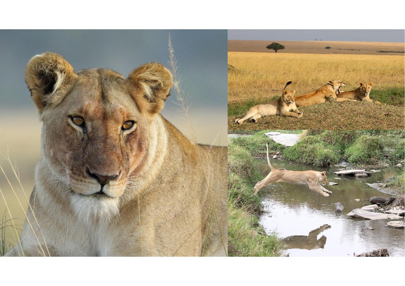 2017-safari_kenya-97