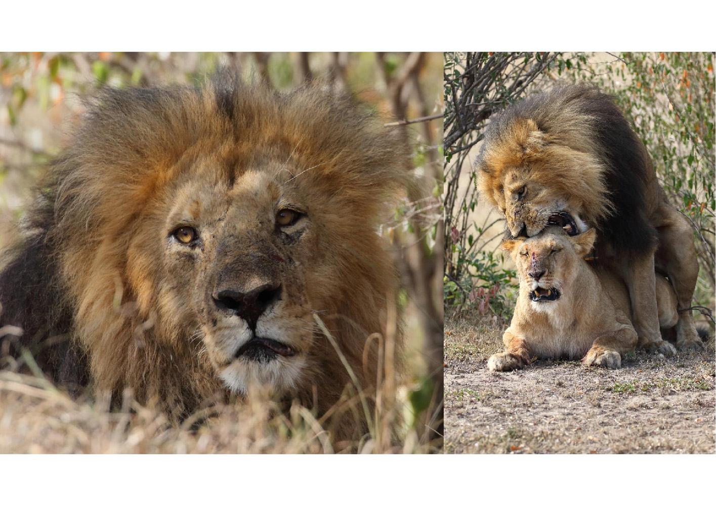 2017-safari_kenya-98