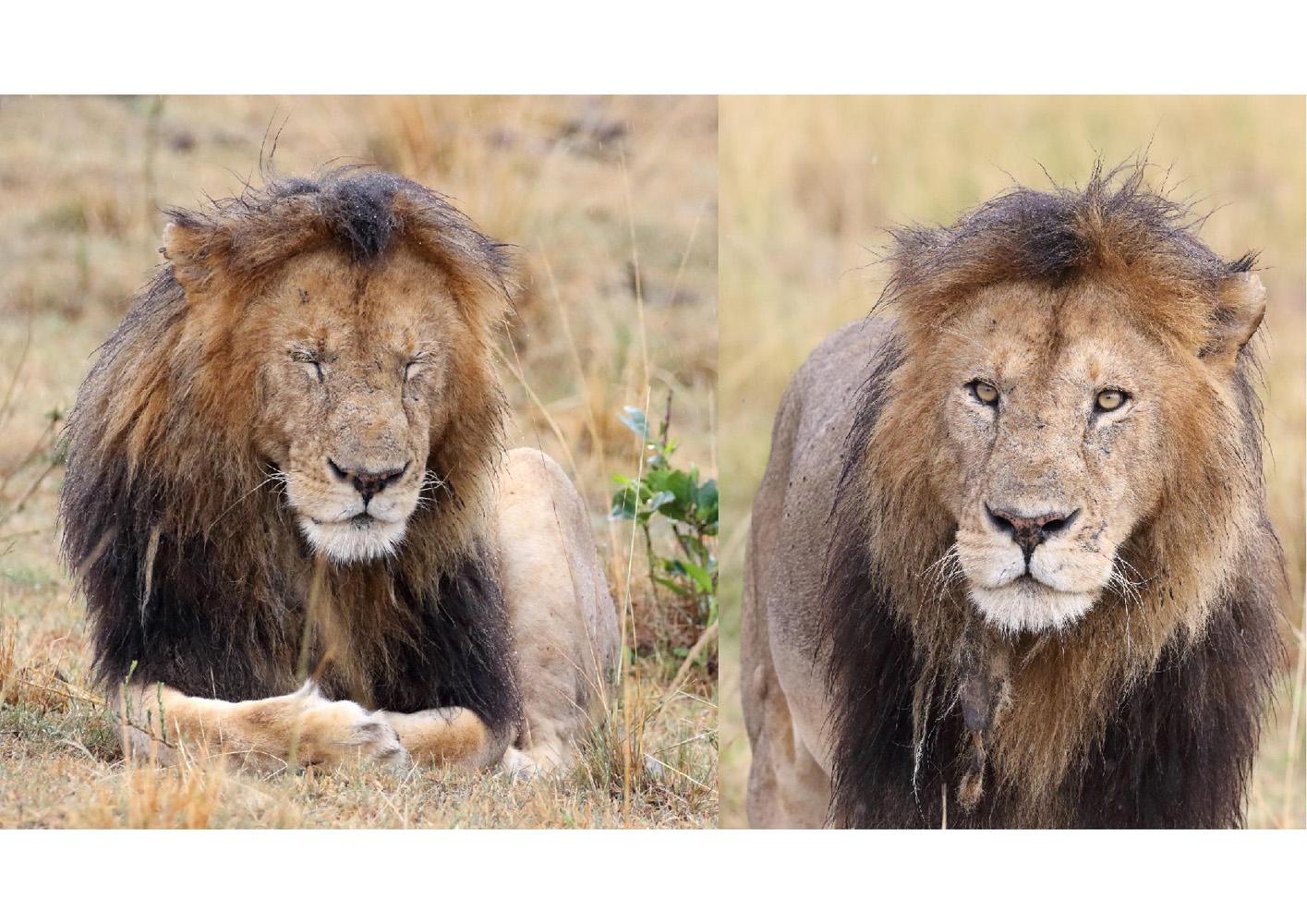 2017-safari_kenya-99