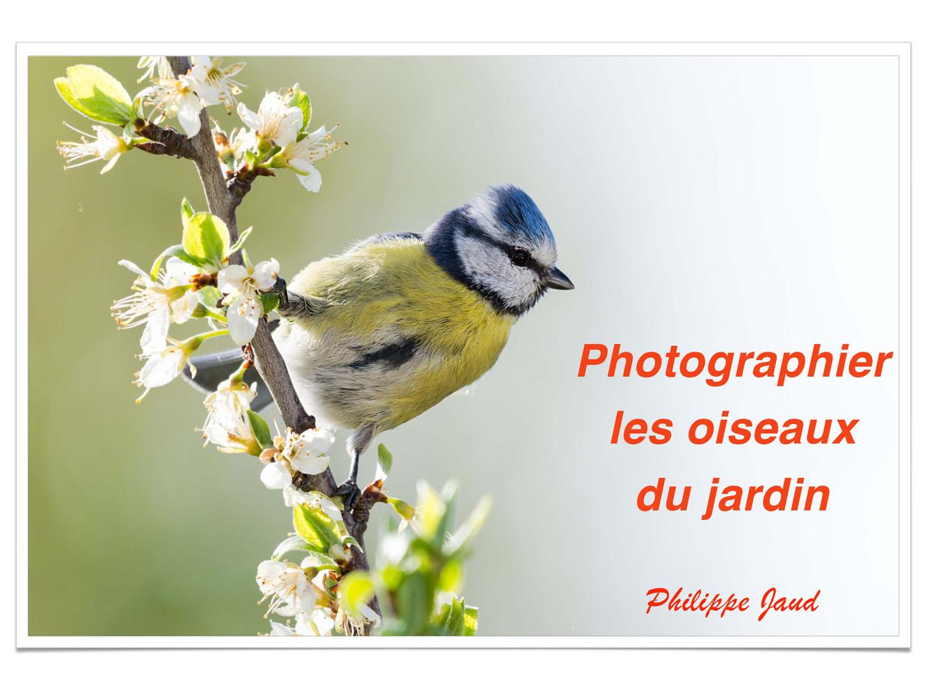 2019-oiseaux-01