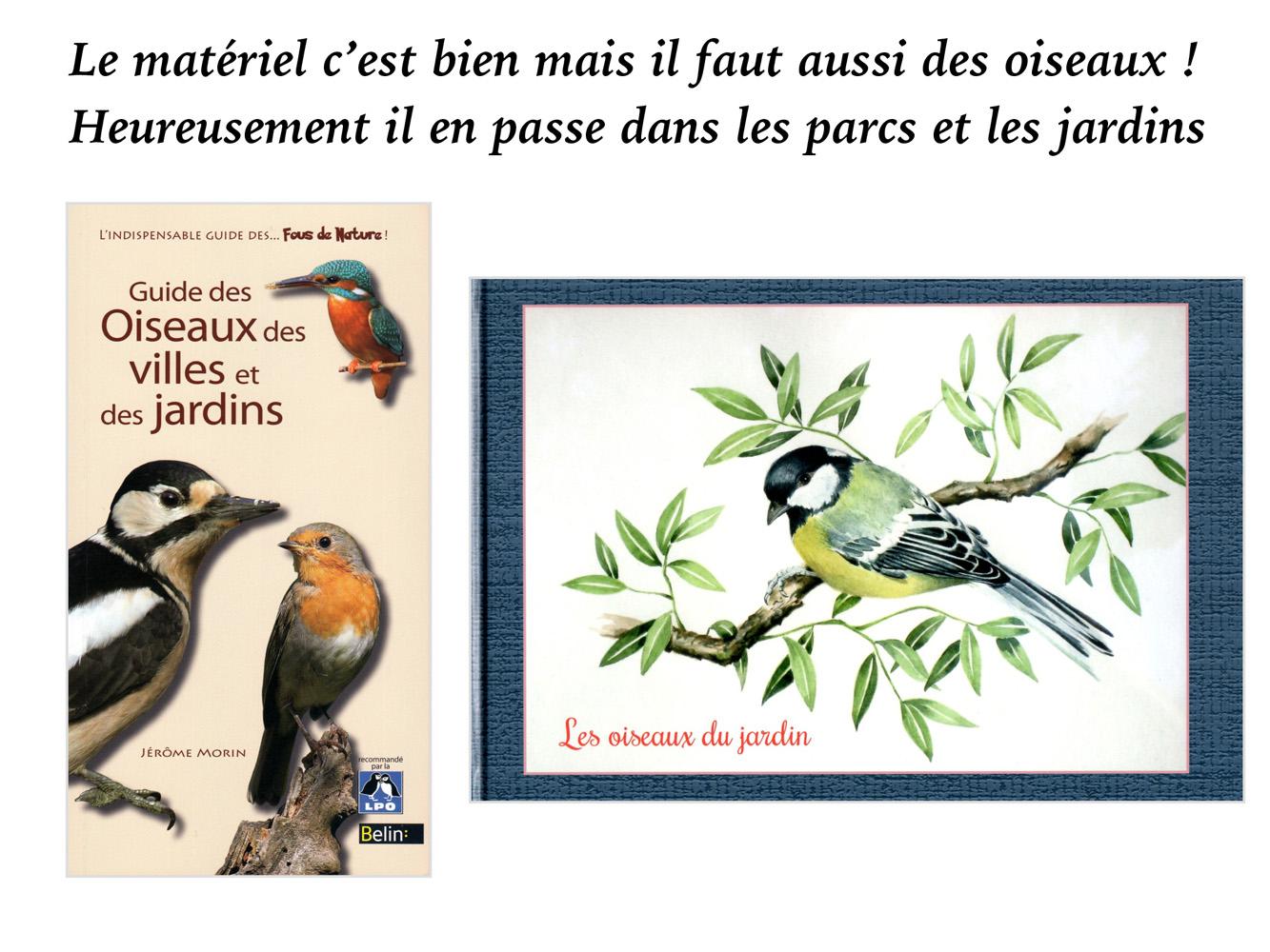 2019-oiseaux-09