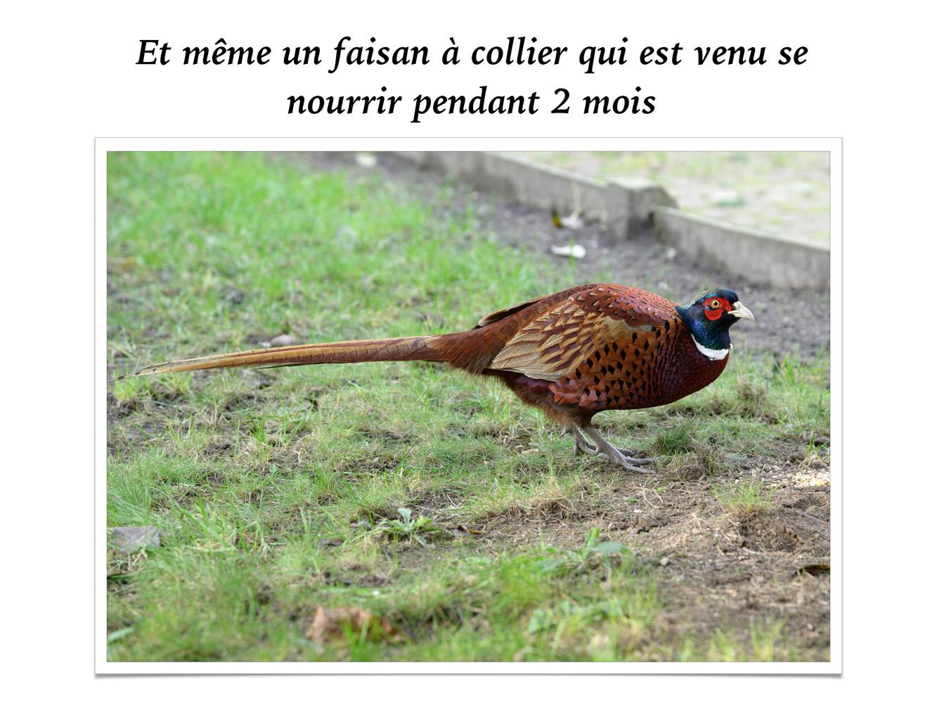 2019-oiseaux-12