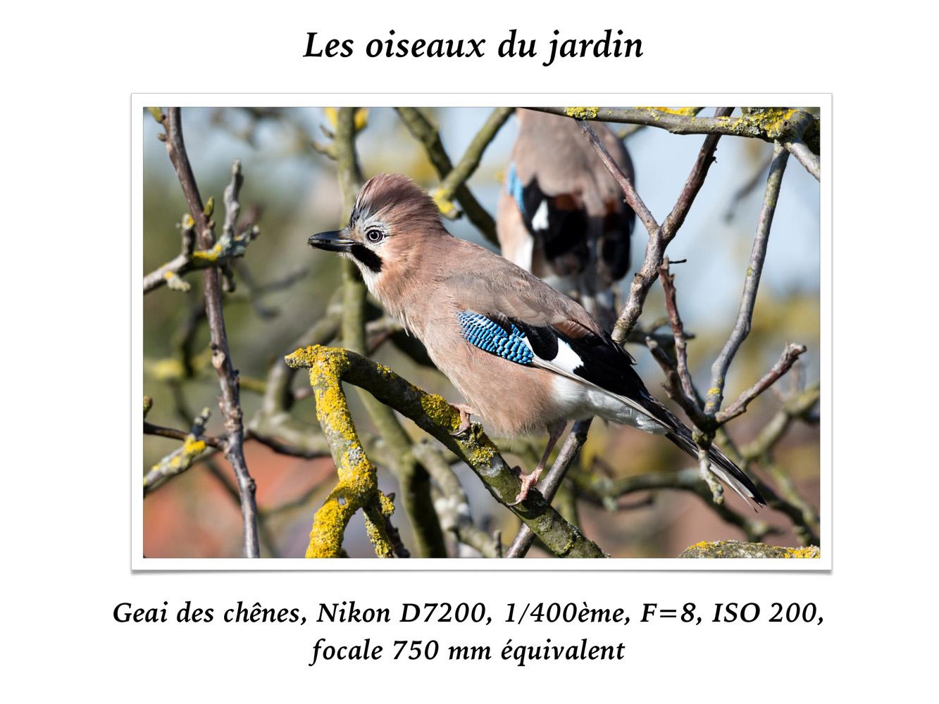 2019-oiseaux-18