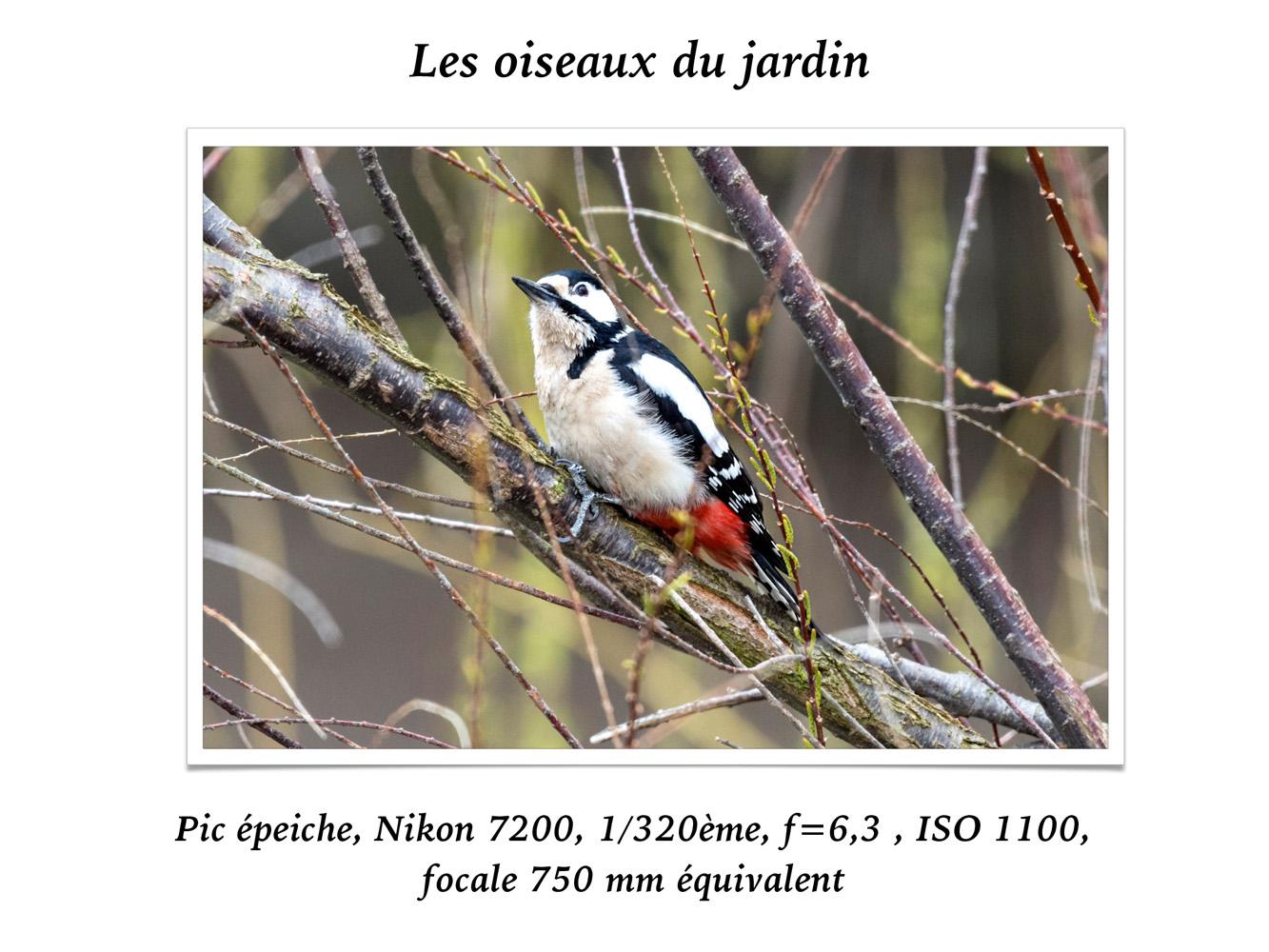 2019-oiseaux-19
