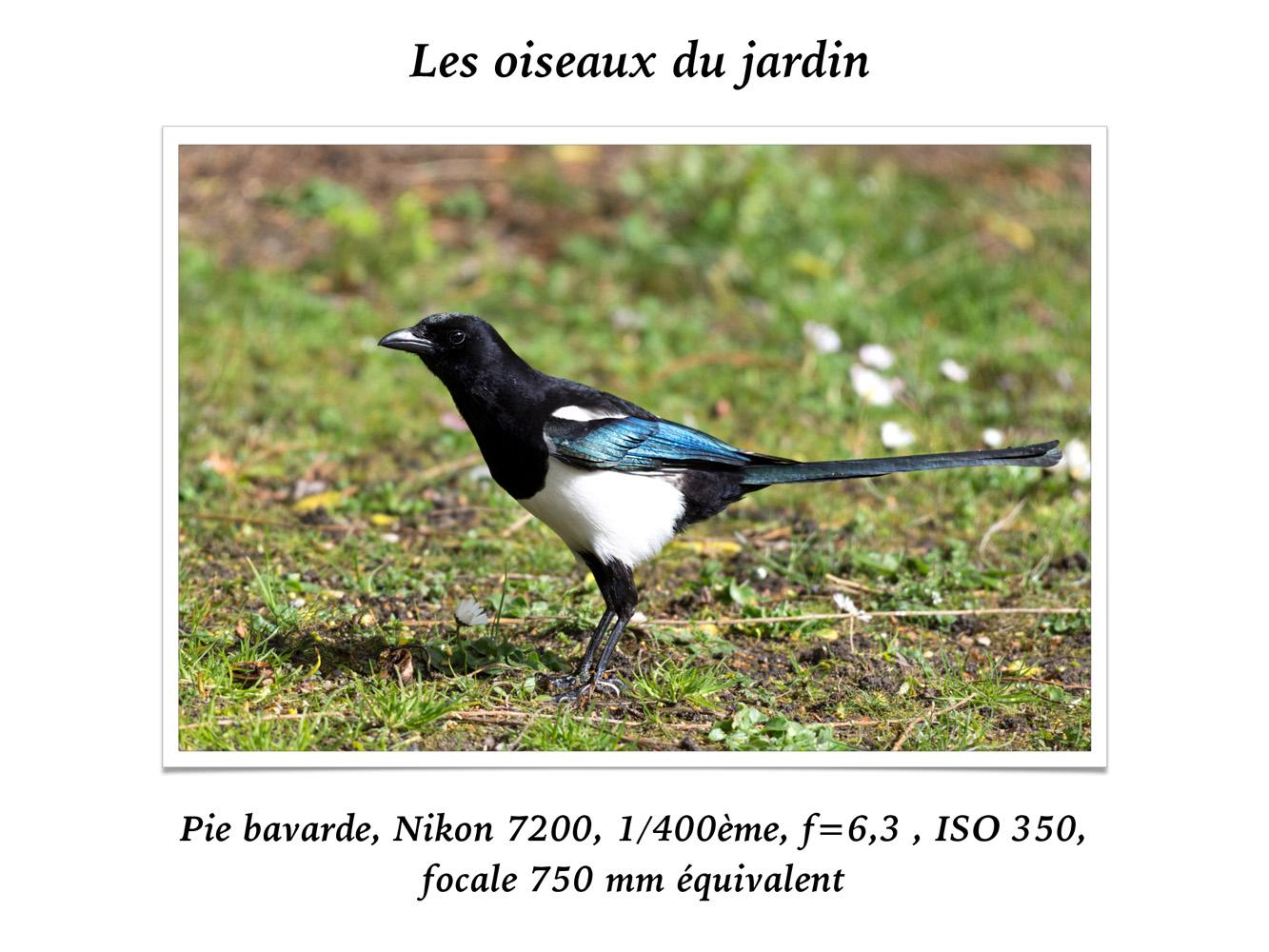 2019-oiseaux-20
