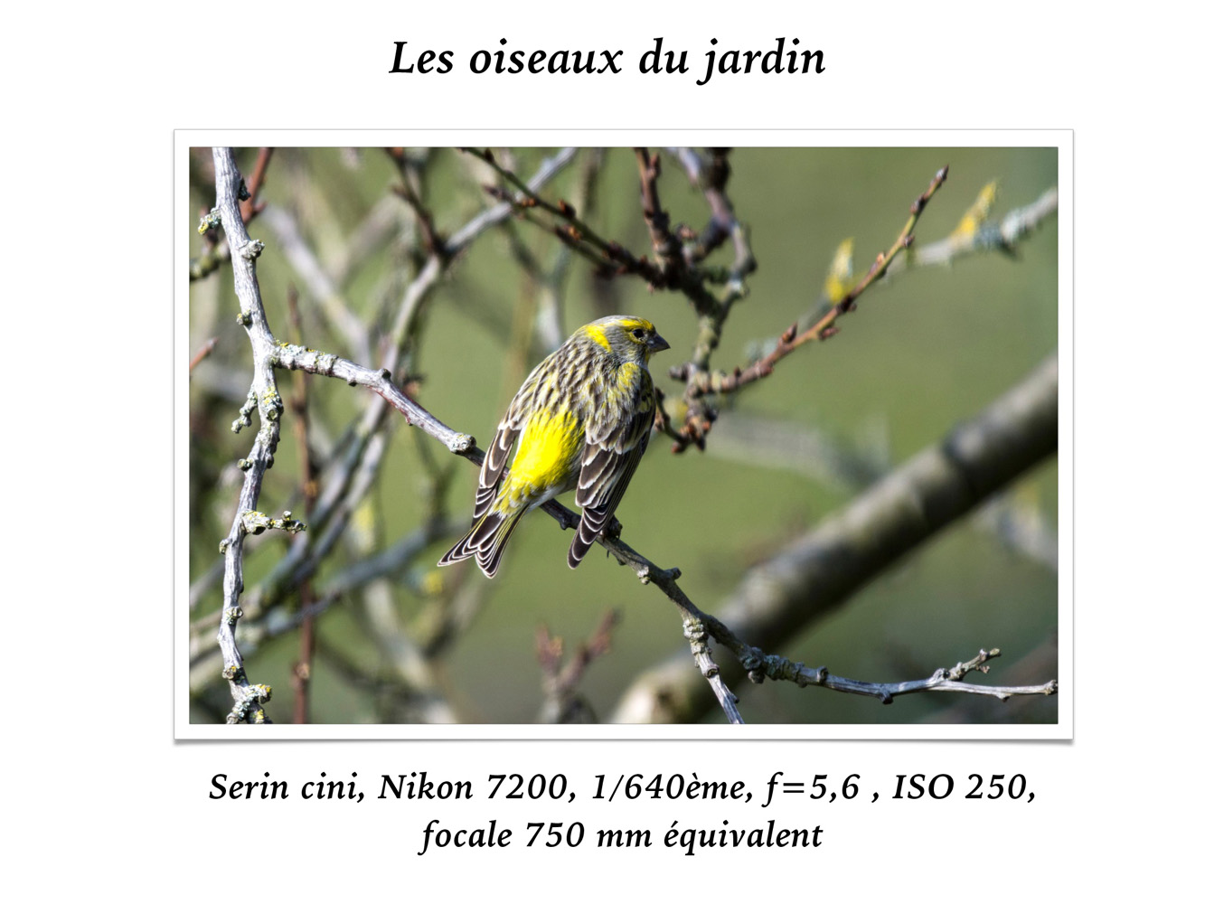 2019-oiseaux-22