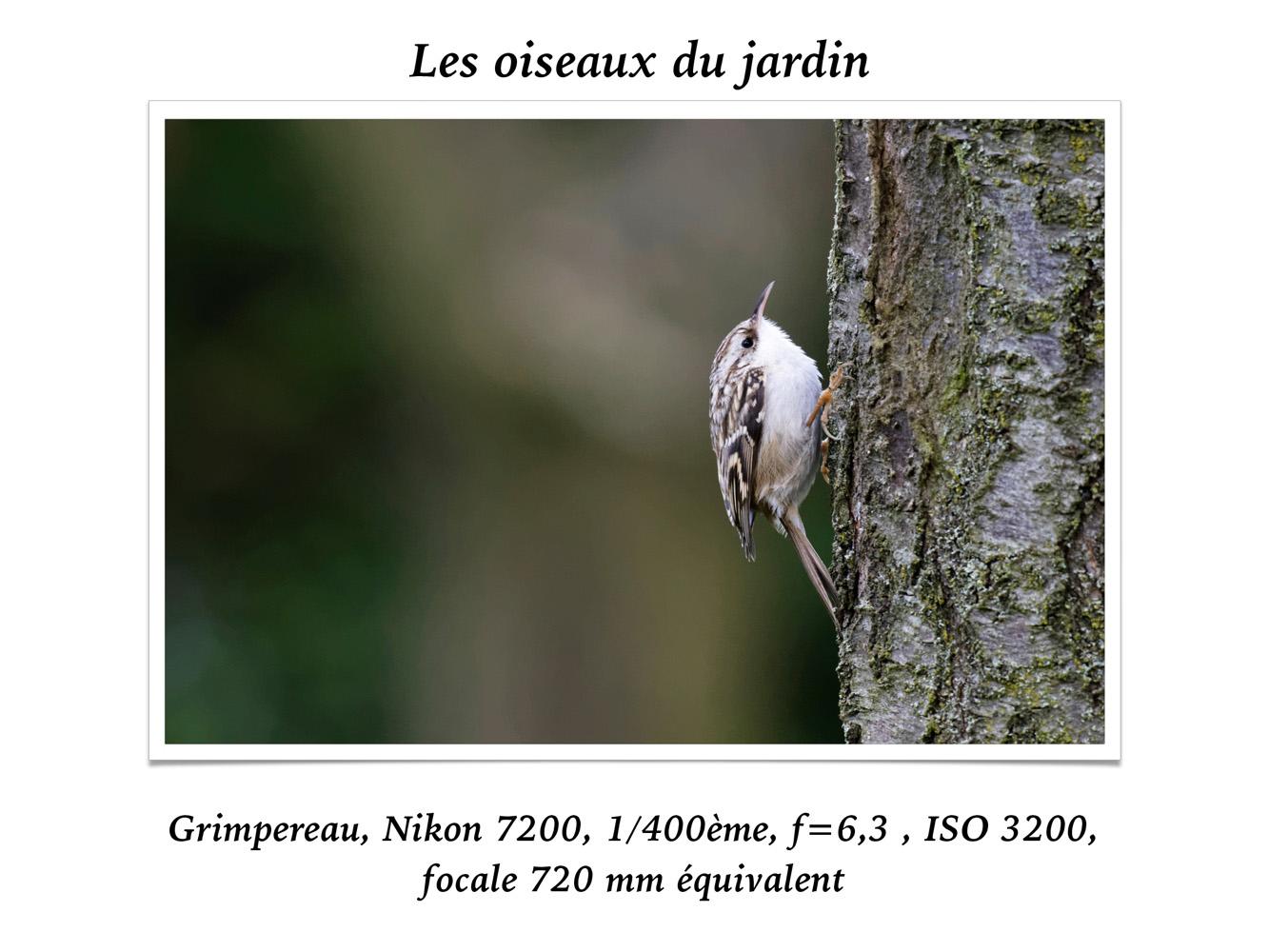 2019-oiseaux-24