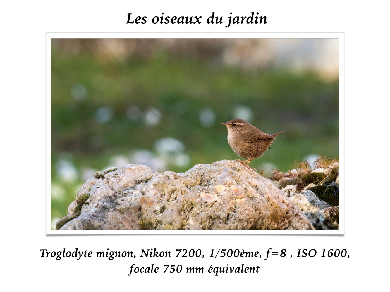 2019-oiseaux-25
