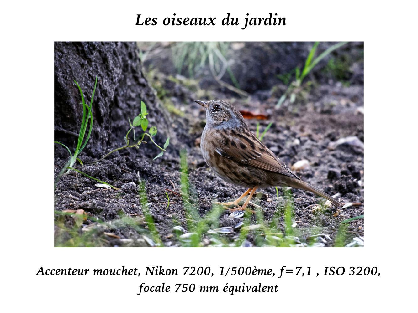 2019-oiseaux-26
