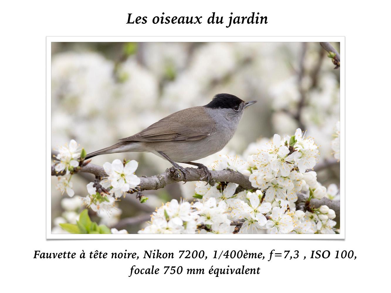 2019-oiseaux-27