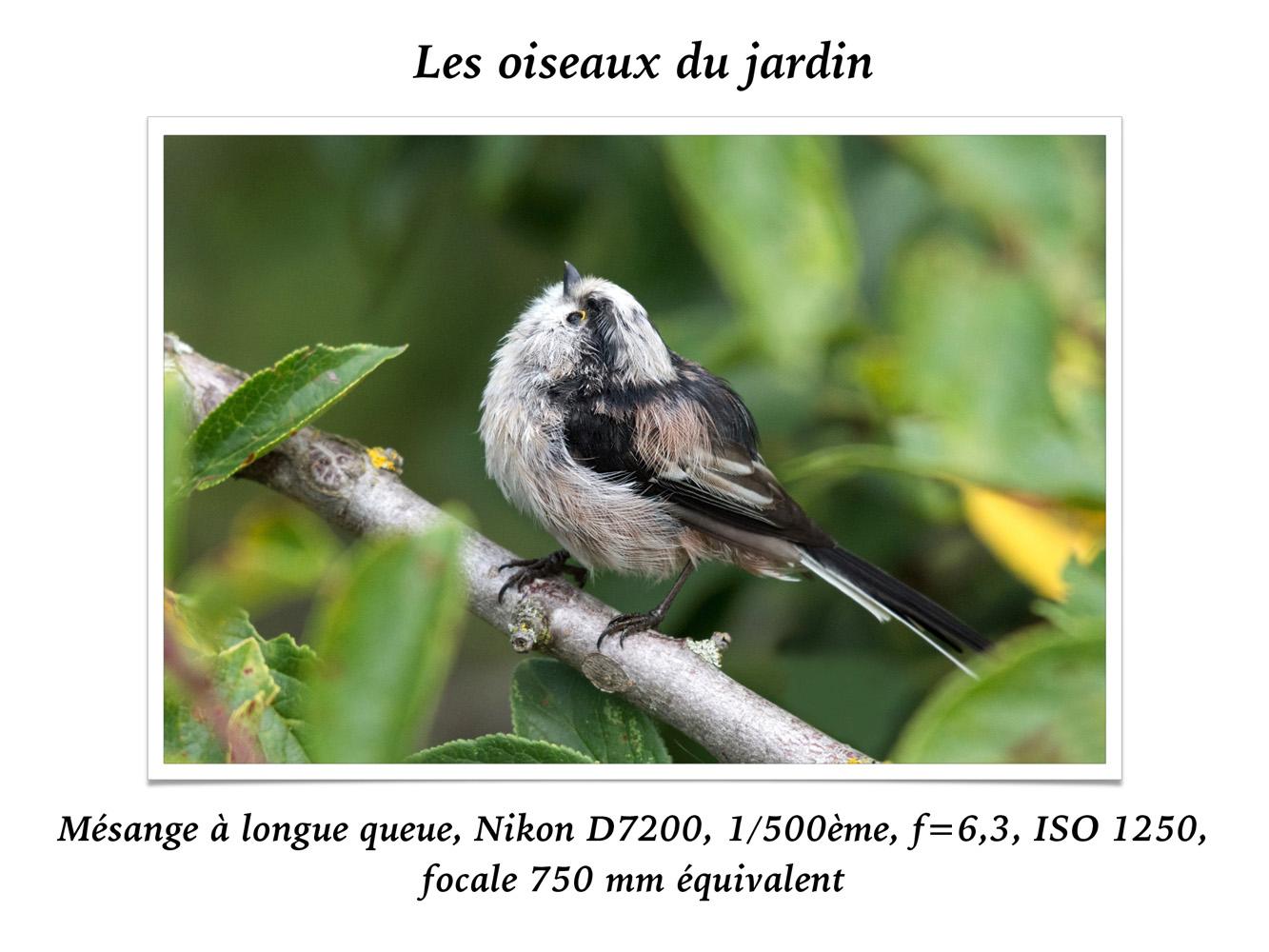 2019-oiseaux-28