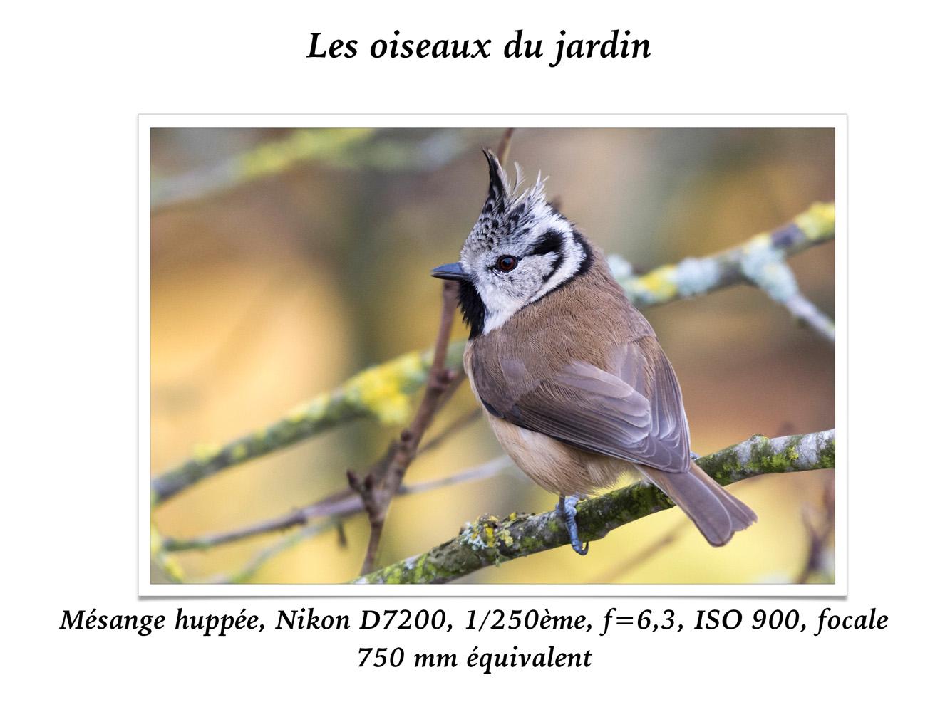 2019-oiseaux-29