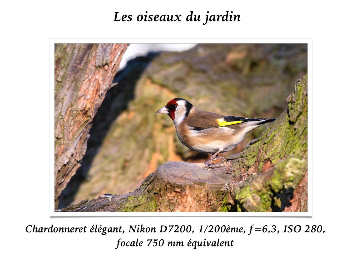 2019-oiseaux-30