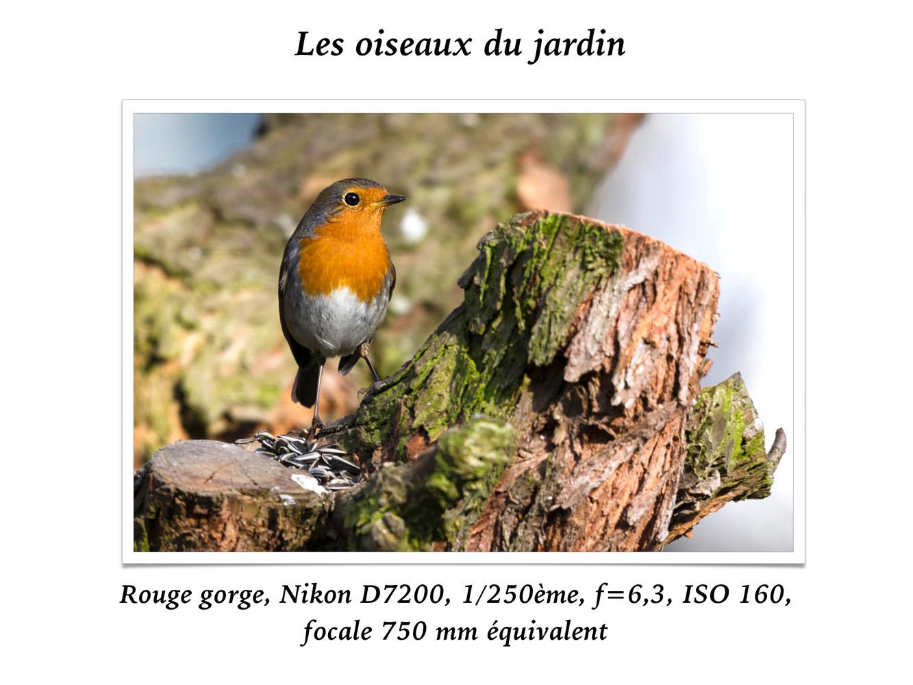 2019-oiseaux-31
