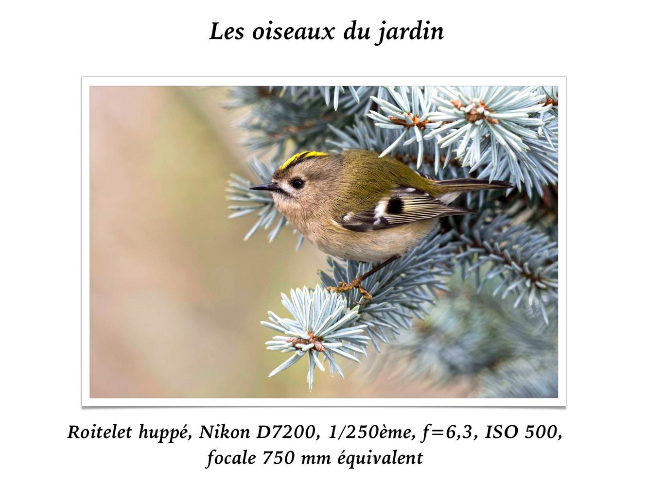 2019-oiseaux-32
