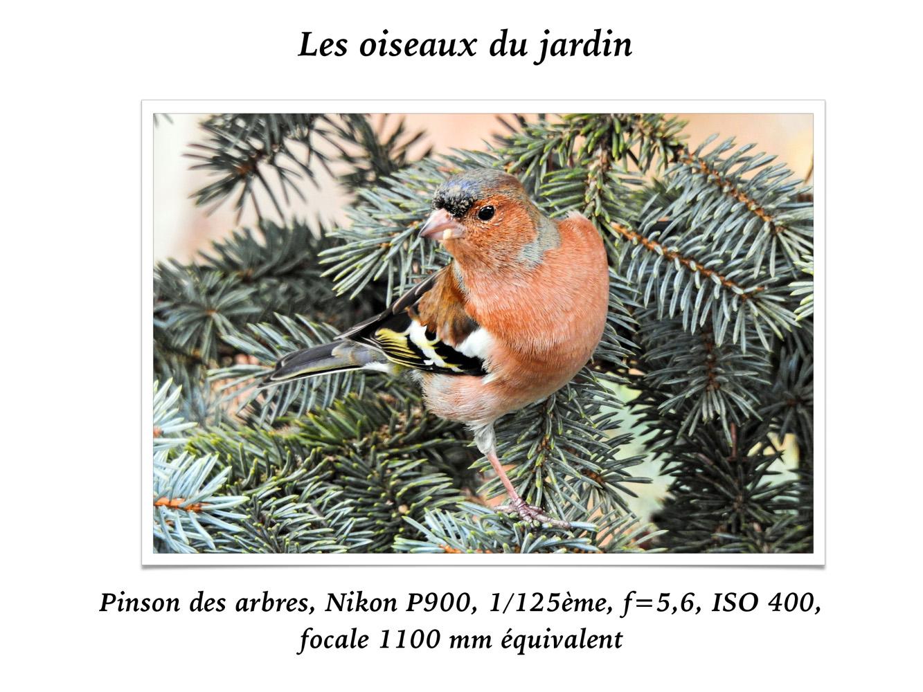 2019-oiseaux-33