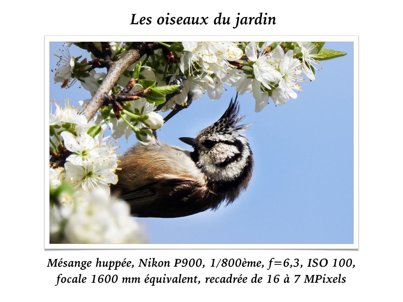 2019-oiseaux-34
