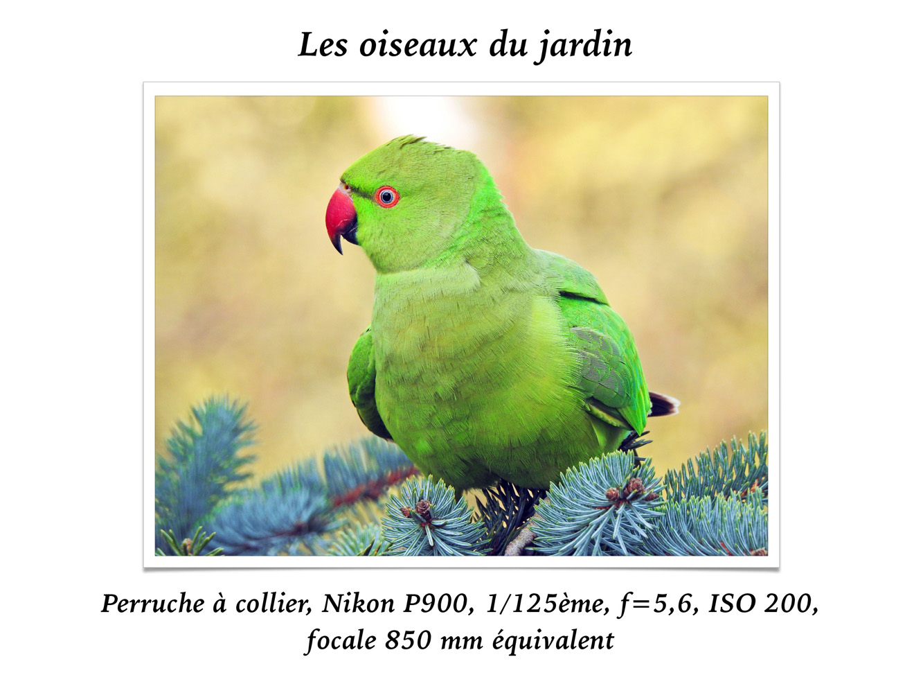 2019-oiseaux-35