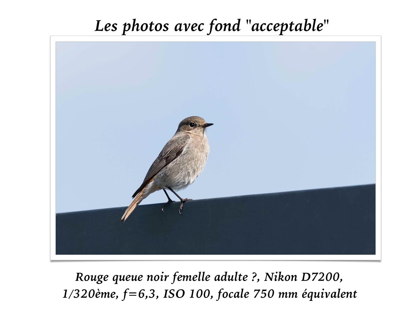 2019-oiseaux-39