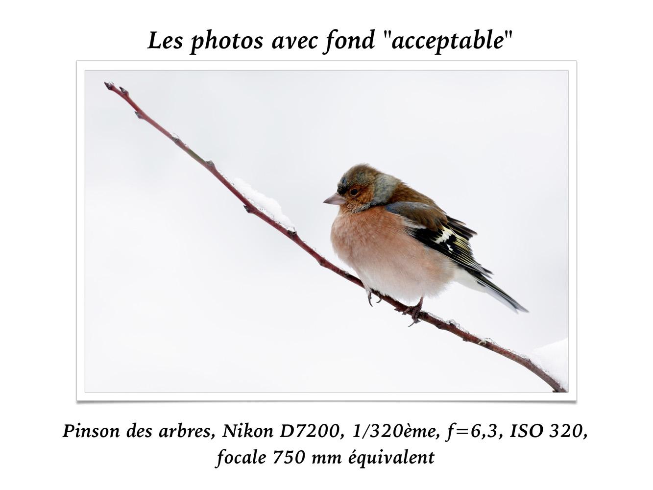 2019-oiseaux-40