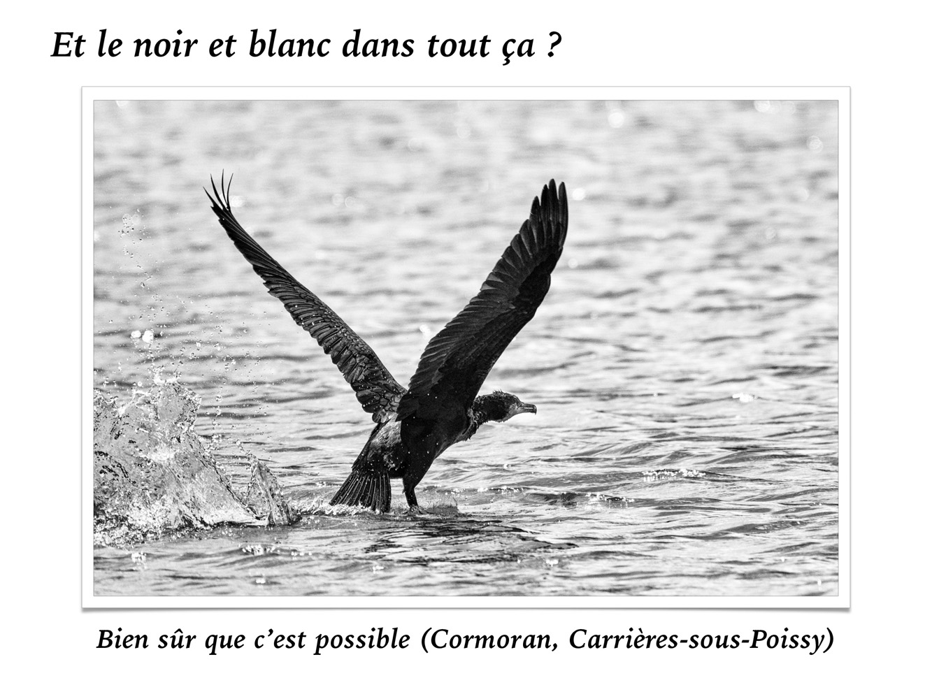 2019-oiseaux-51