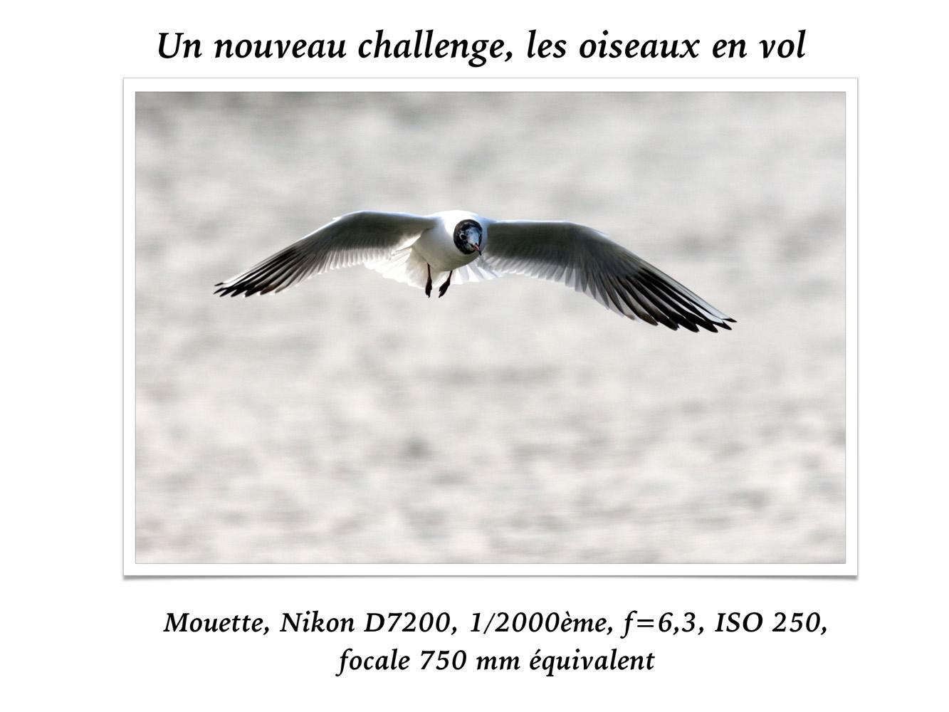 2019-oiseaux-61
