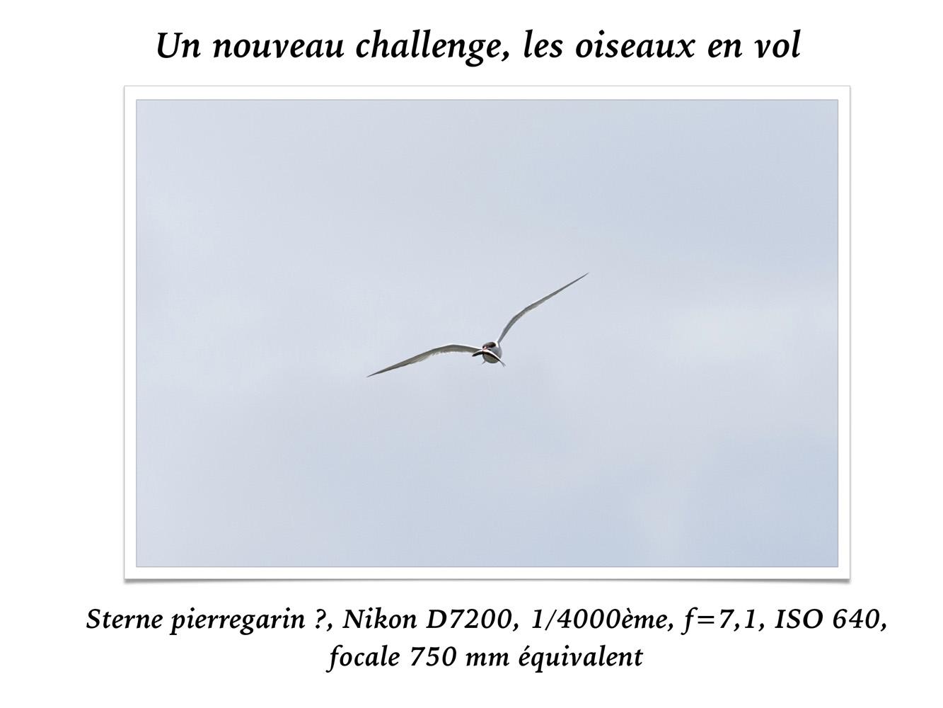 2019-oiseaux-62