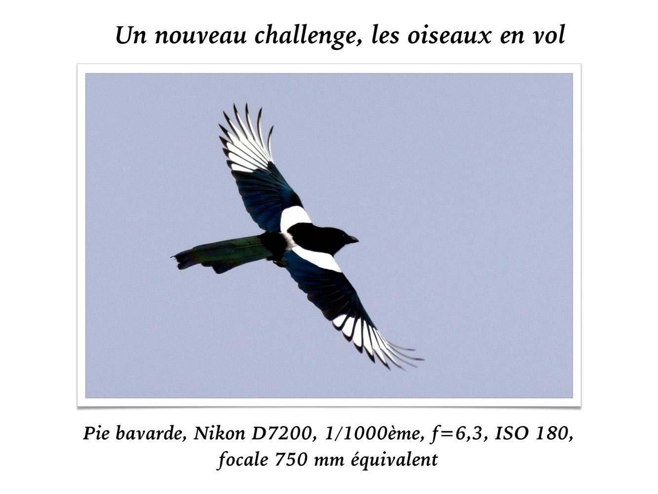 2019-oiseaux-63