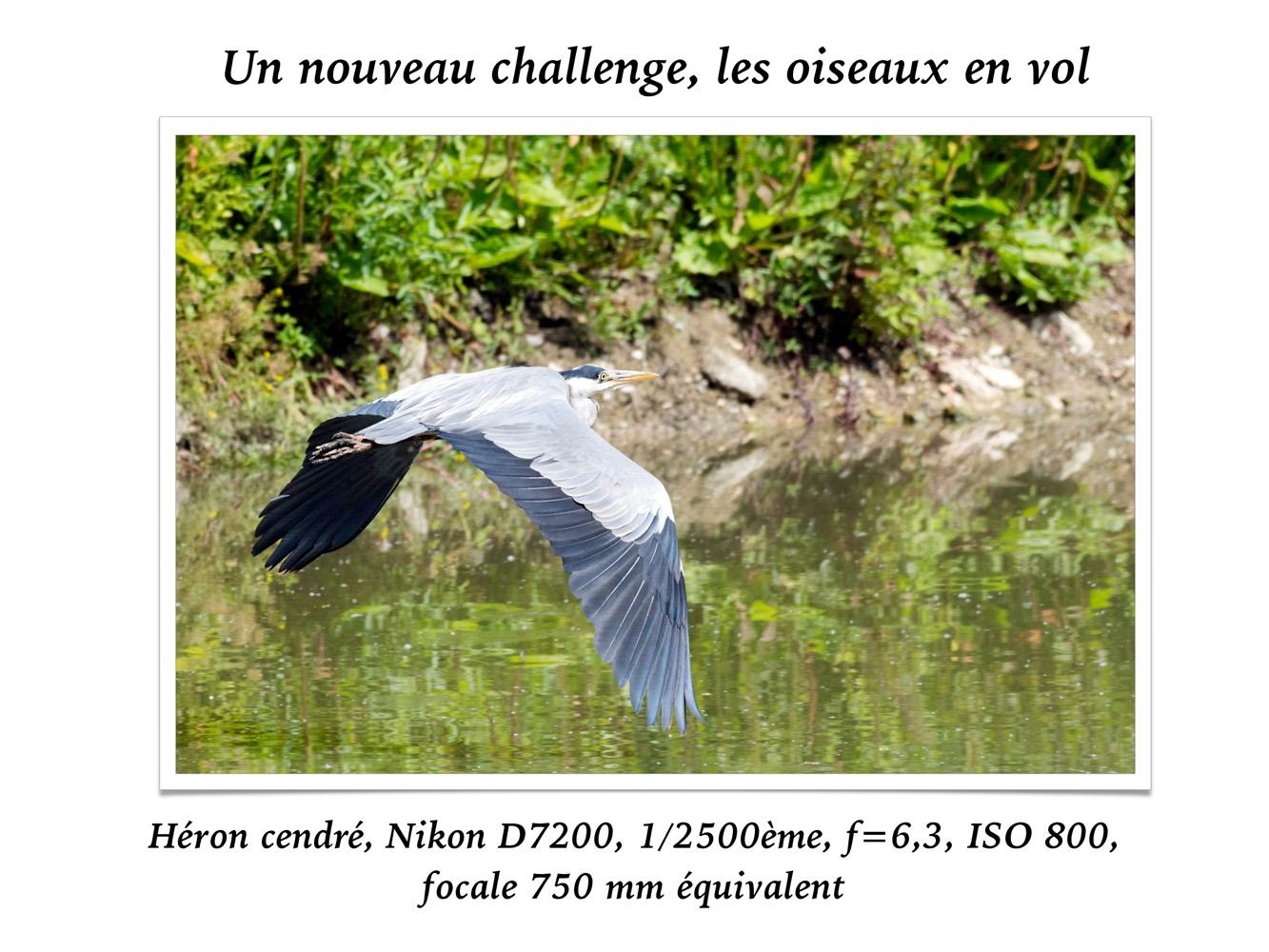 2019-oiseaux-64