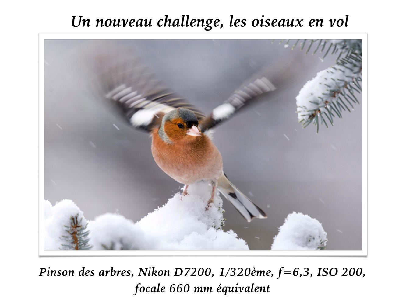 2019-oiseaux-65